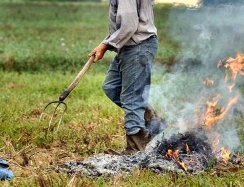 Come bruciare i residui vegetali in modo corretto