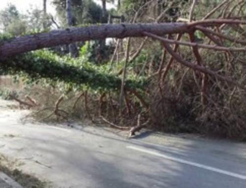 Interventi forestali e ambientali su terreni del comune di Montignoso e di privati cittadini